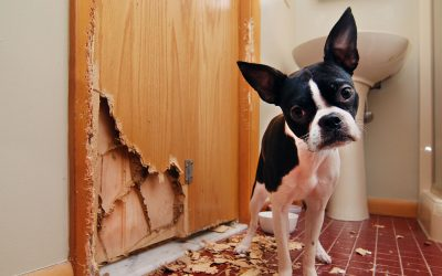 Puppy Proofing Your Home and Furniture